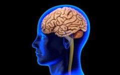 brain_f2