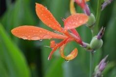 orangeflor